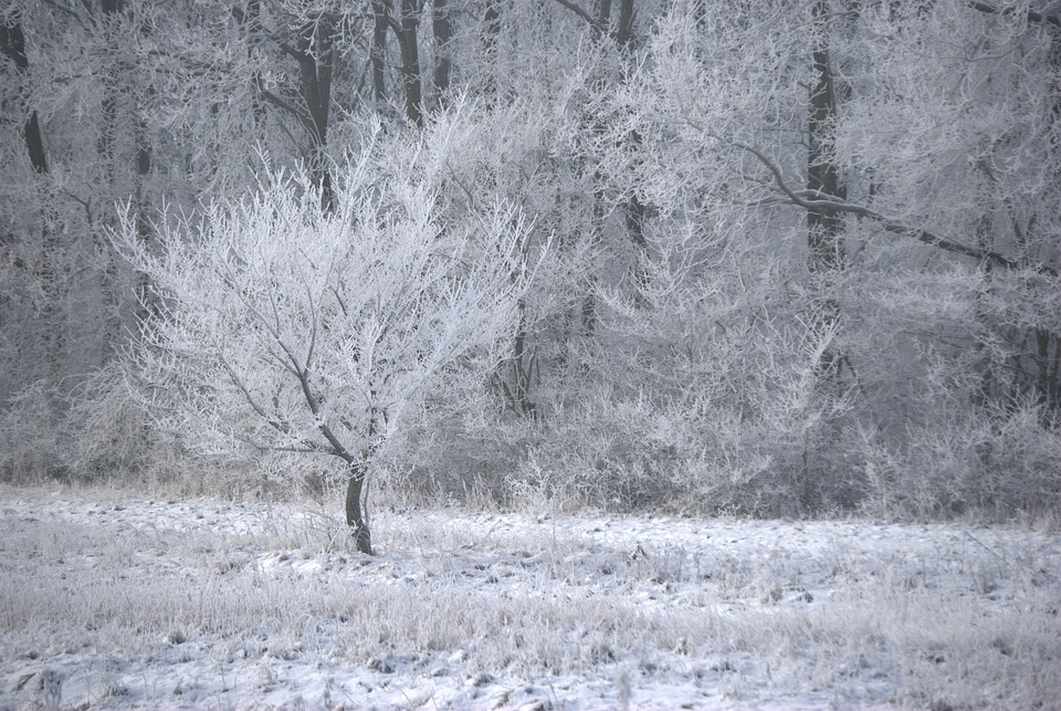 Winter, Ice, Frost, Wood, Forest