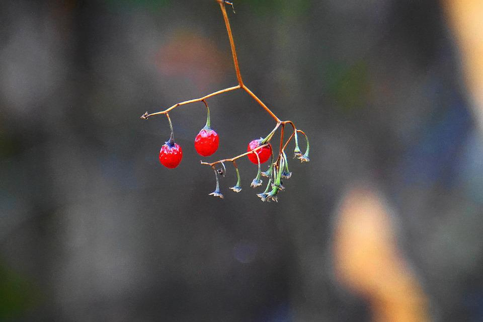 Fruits Of The Forest, In Winter, Dry, Winter, Frost