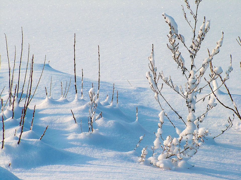 Winter, Frost, Snow, Plants