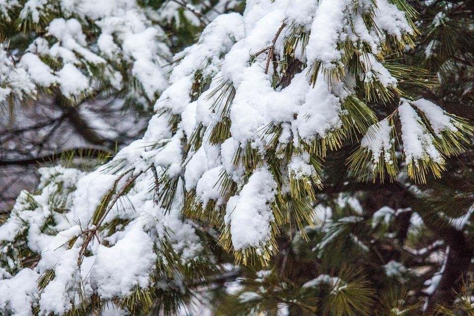 Winter, Tree, Snow, Frost, Season