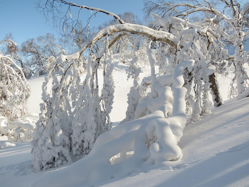 Winter, Winter Forest, Frost, Snow, Snowdrifts, Trees