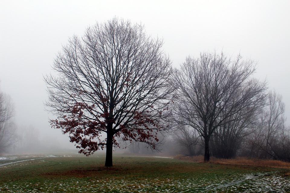 Fog, Winter, Tree, Nature, Landscape, Wintry, Frosty