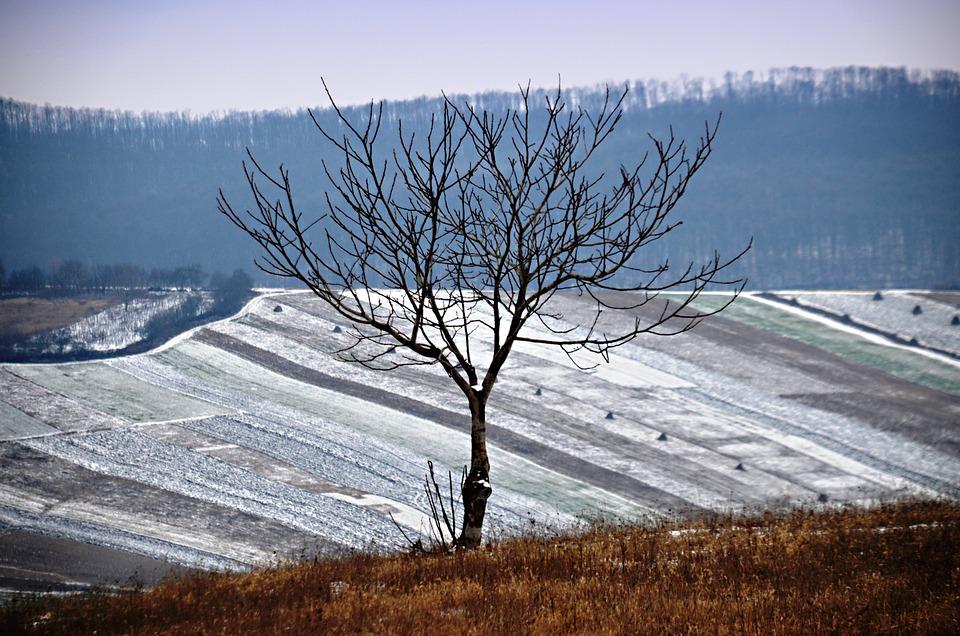 Winter Landscape, Nature, Walk, Frosty, Snowy Landscape