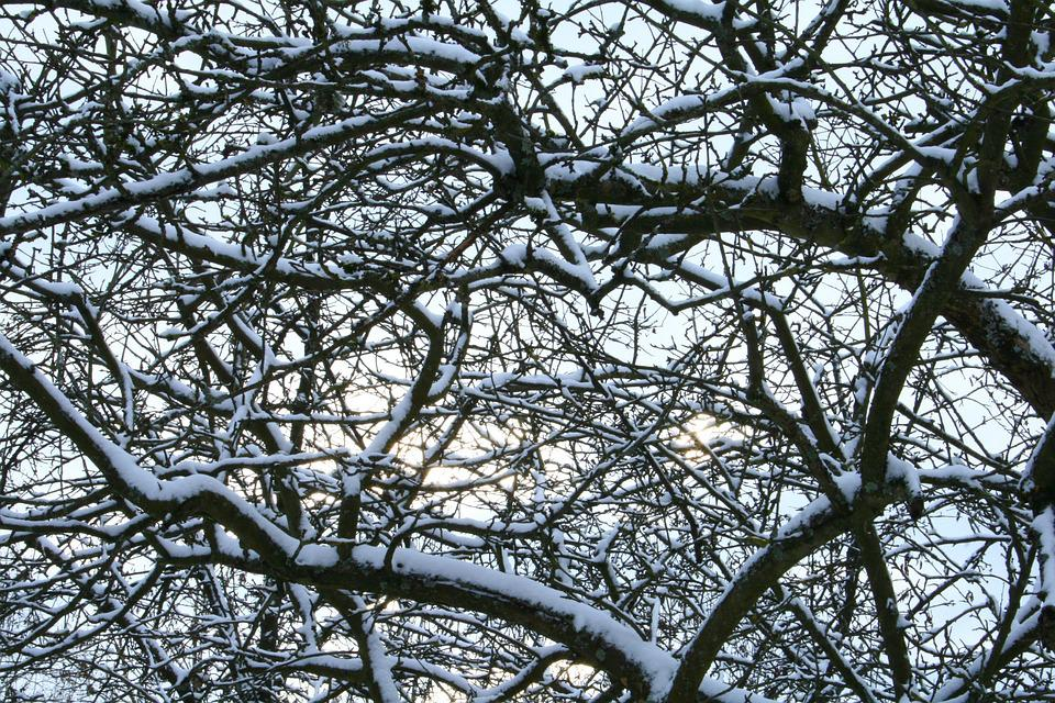 Snow, Trees, Winter, Forest, Ice, Wintry, Cold, Frozen