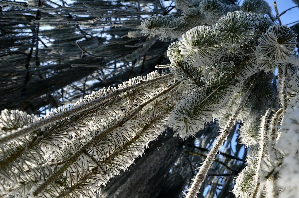 Frost, Winter, Cold, Frozen, Nature, Ice, Crystals