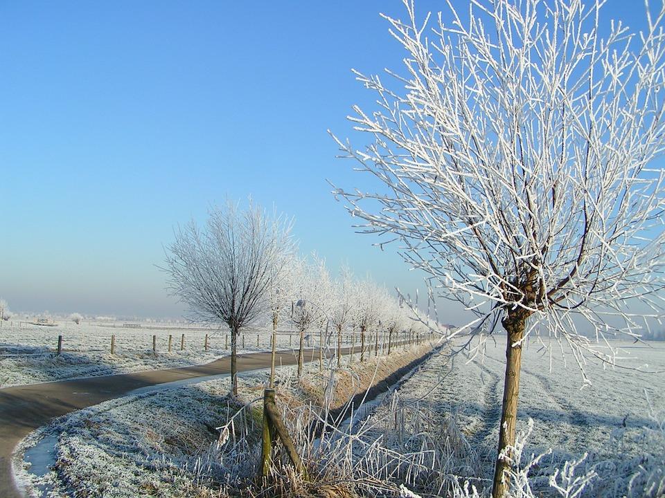 Winter, Ripe, White, Landscape, Freezing, Frozen, Frost
