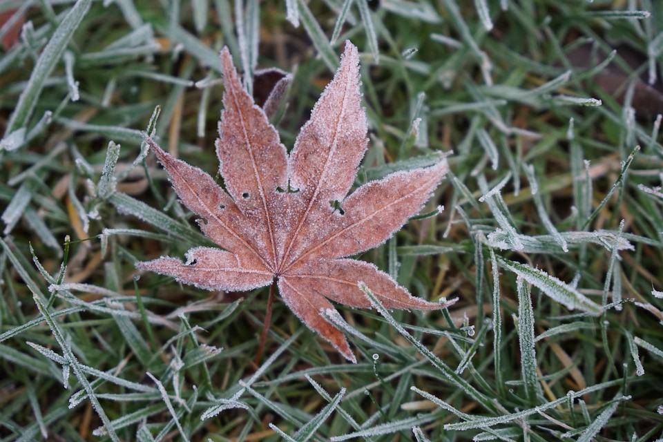 Frost, Frozen Plans, Frozen Leaf, Frozen, Winter