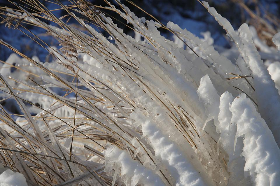Winter, Ice, Frost, Freezing, Frozen Reed, Nature