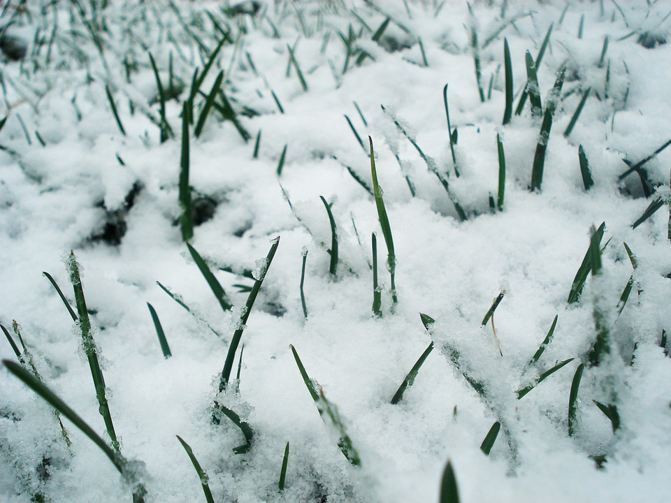 Grass, Snow, Green, Frozen, Frost, Spring, Winter