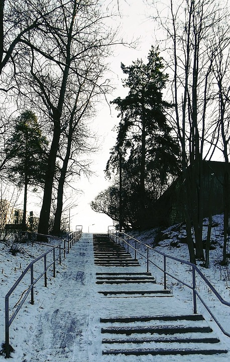 Stairs, Trees, Snow, Ice, Frost, Frozen, Cold, Outdoors