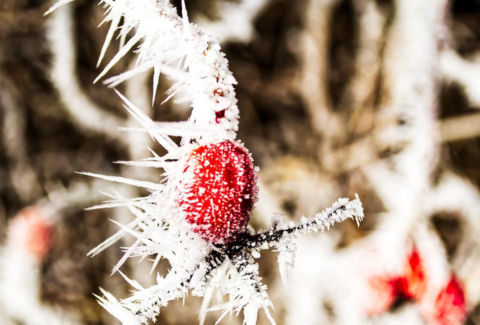 Winter, Ice, Crystal, Snow, Cold, Frozen, Frost