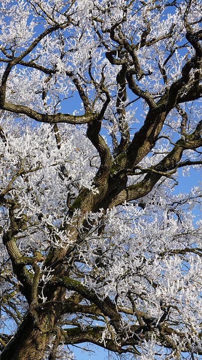 Winter, Eiskristalle, Frozen, Ice, Cold, Winter Magic