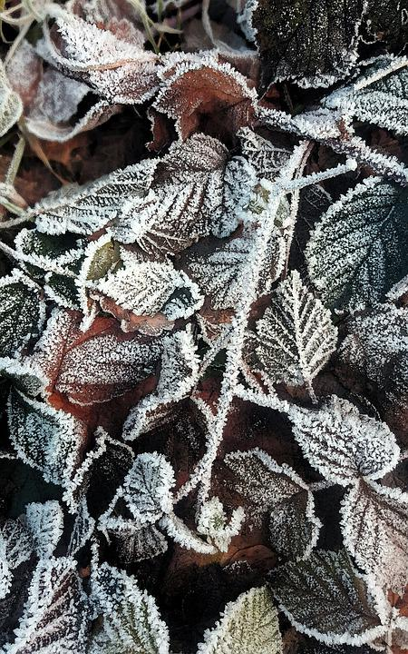 Winter, Frost, Frozen, Cold, Nature, Ice, Snow, Wintry