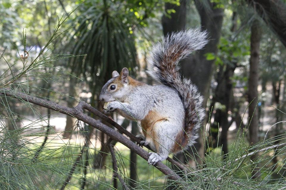 Squirrel, Animals, Nature, Eat, Apple, Fruit, Cdmx