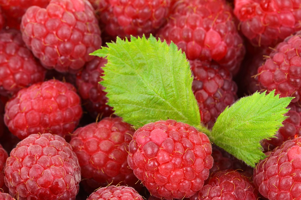 Raspberry, Berry, Detail, Food, Fresh, Fruit, Red, Ripe