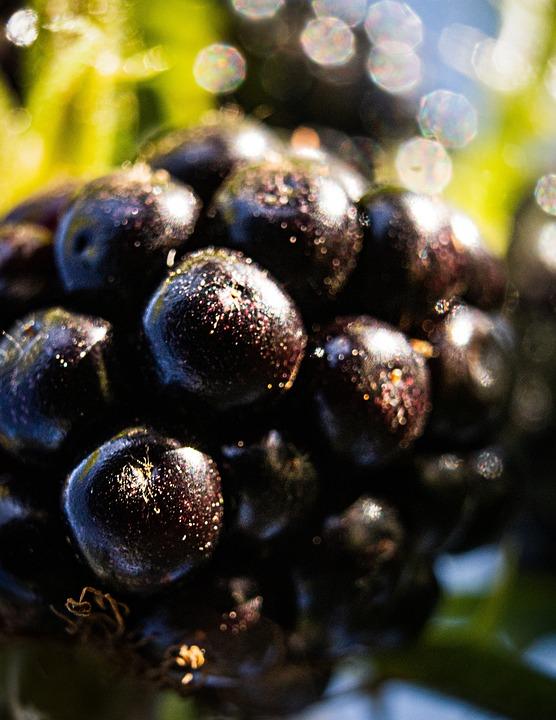 Blackberry, Summer, Berry, Garden Of Joy, Fruit