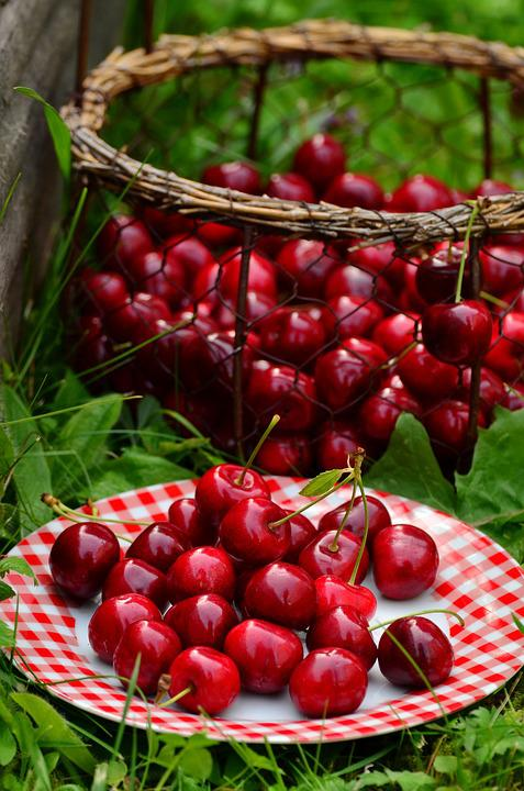 Cherries, Fruits, Sweet Cherry, Cherry Harvest, Fruit
