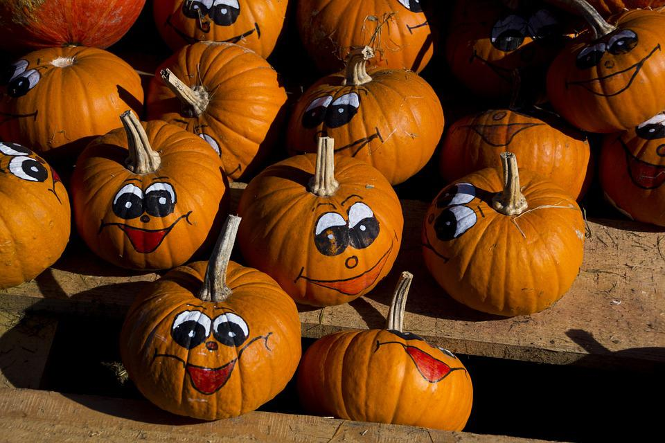 Pumpkin, Fruit, Autumn, Nature, Choose, Lower Austria