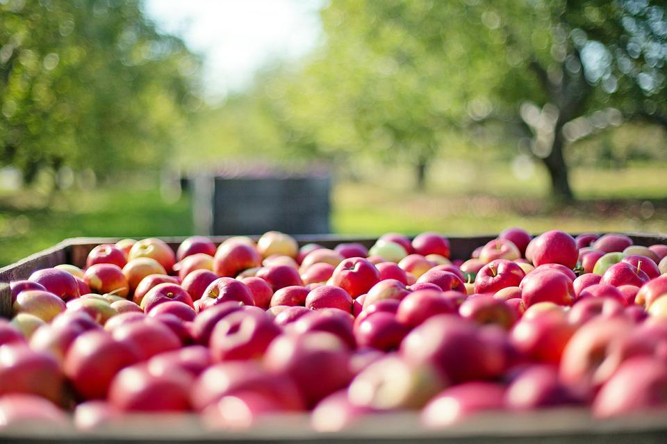 Apples, Fall, Autumn, Fruit, Nature, Food, Harvest