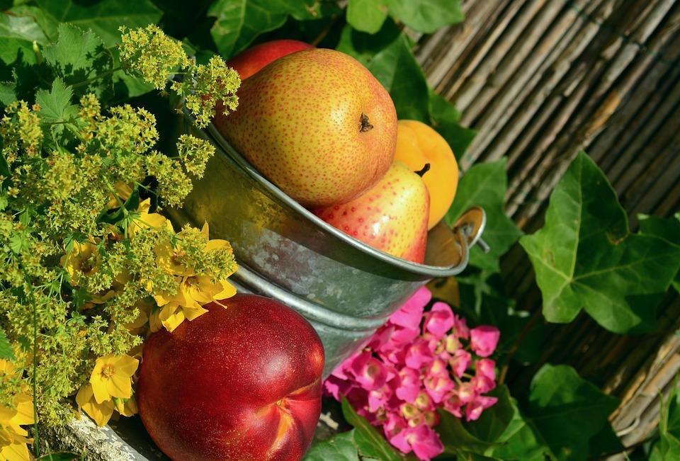Fruits, Garden, Fruit, Harvest, Still Life, Colorful