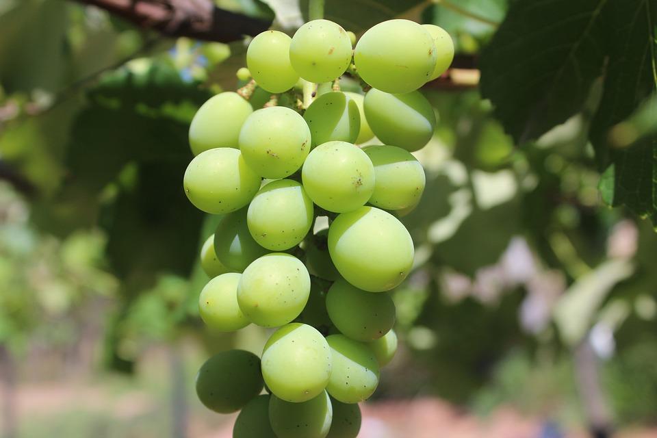 Grapes, Greens, Fruit, Grape