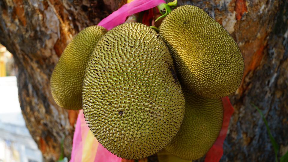 Jackfruit, Fruit, Green, Thailand Fruit, Tree