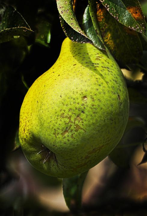 Pear, The Last Bulb, Fruit, Pome Fruit, Fruit Growing