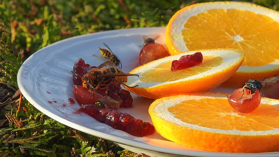 Insects Feeding, Wasp, Hornet, Fly, Fruit, Grape, Jelly