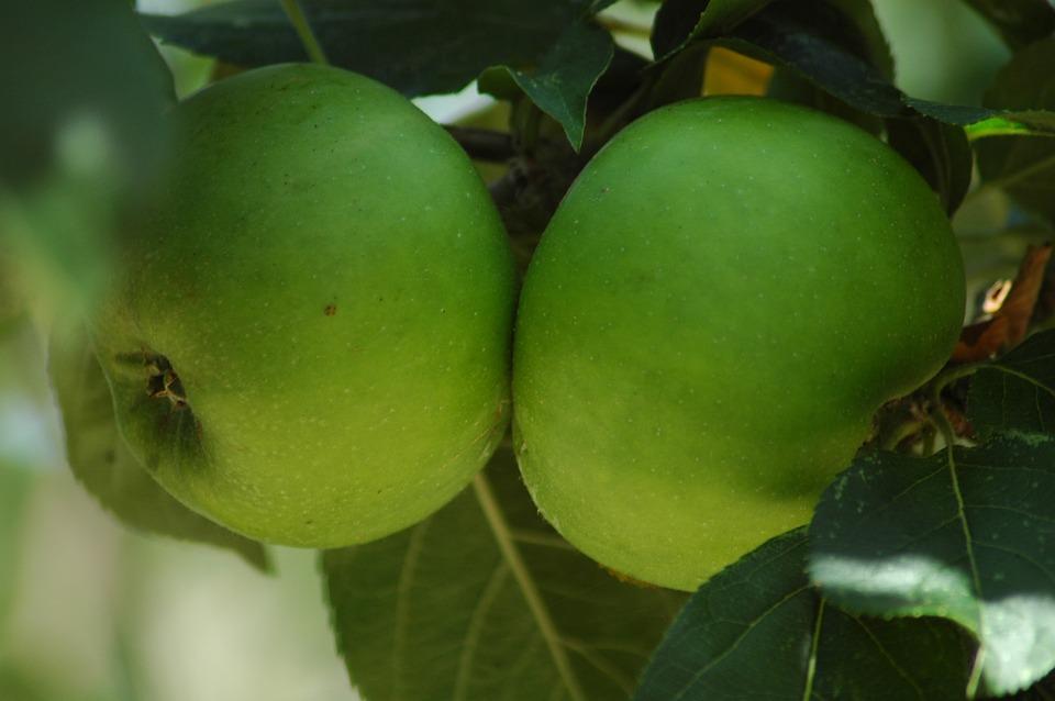 Fruit, Food, Leaf, Nature, Flora, Grow, Juicy, Apple
