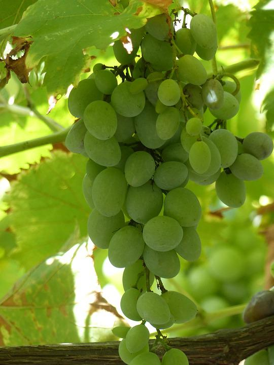 Fruit, Pile, Agriculture, Food, Nature, Grape, Winery