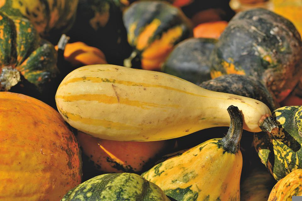 Pumpkin, Fruit, Autumn, Choose, Food, Vegetables