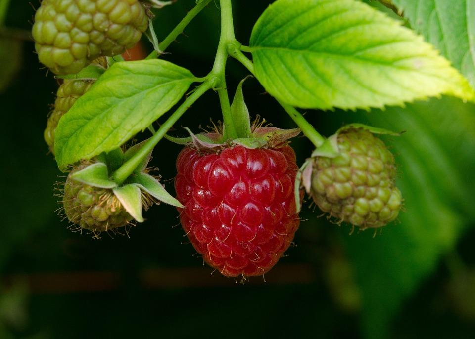 Raspberry, Raspberries, Fruits, Fruit, Red, Summer