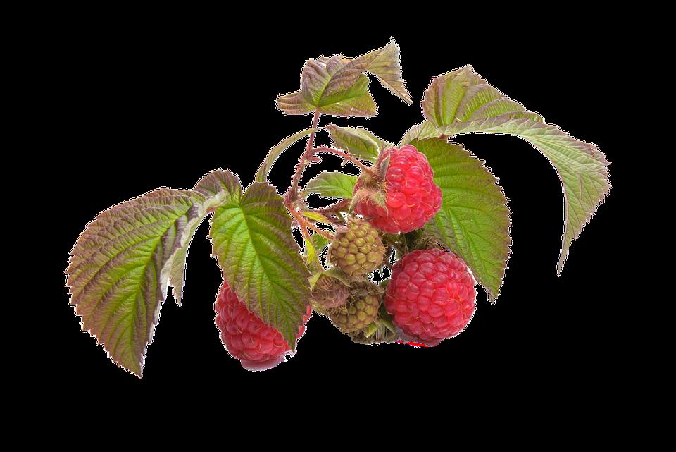 Raspberry, Fruit, Red