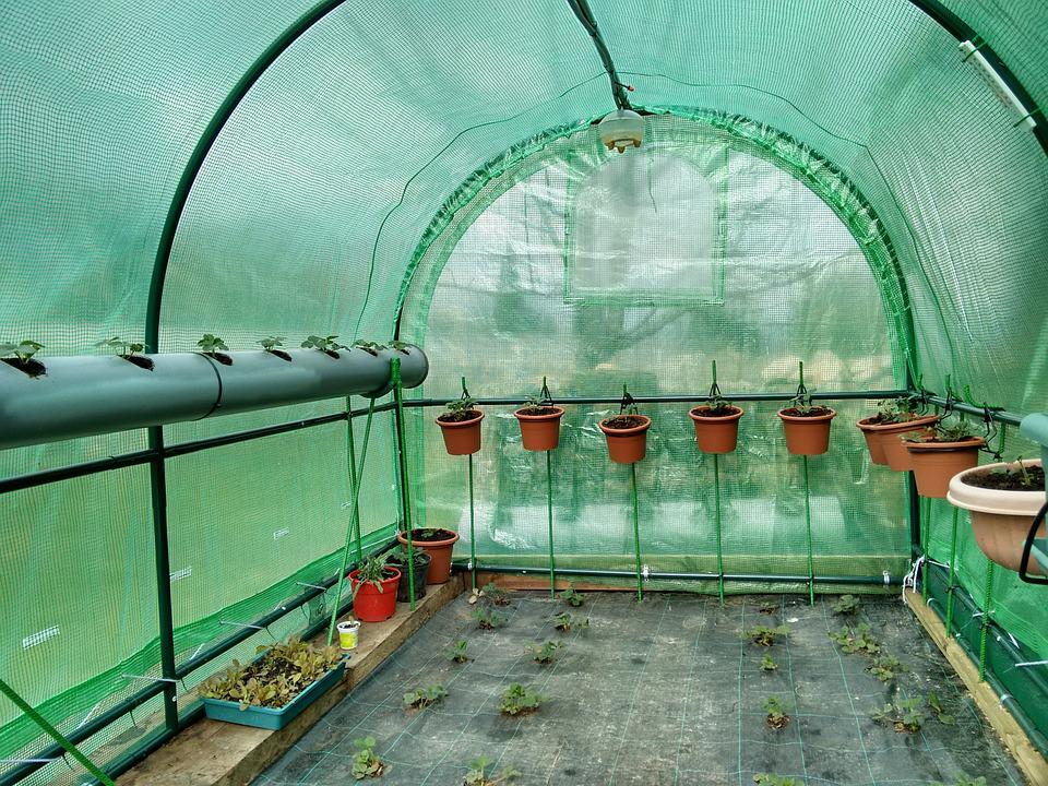 Greenhouse, Strawberries, Fruit
