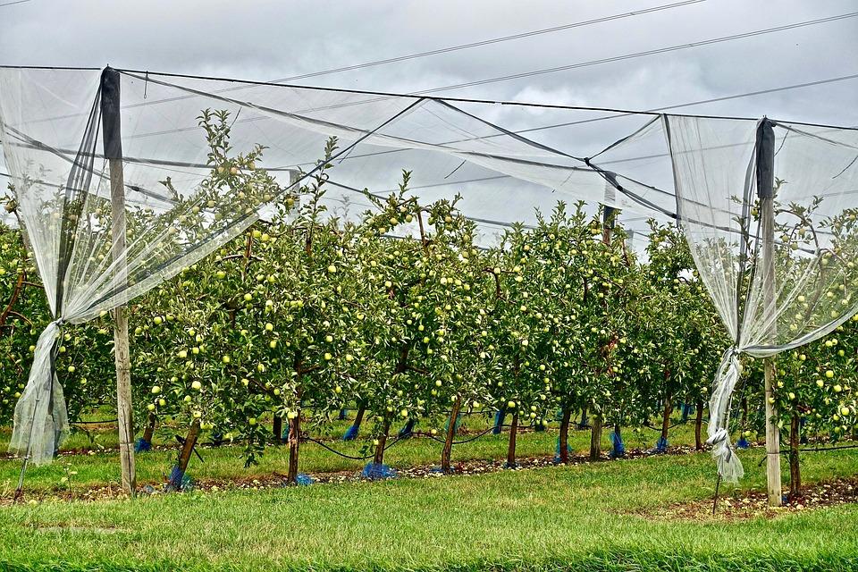 Fruit Tree, Apples, Harvest, Orchard, Bounty, Fruit
