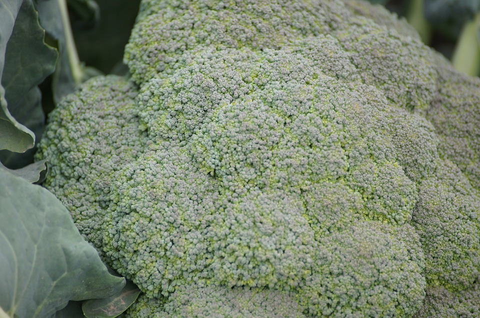 Broccoli, Fruits And Vegetables, Agriculture, Food