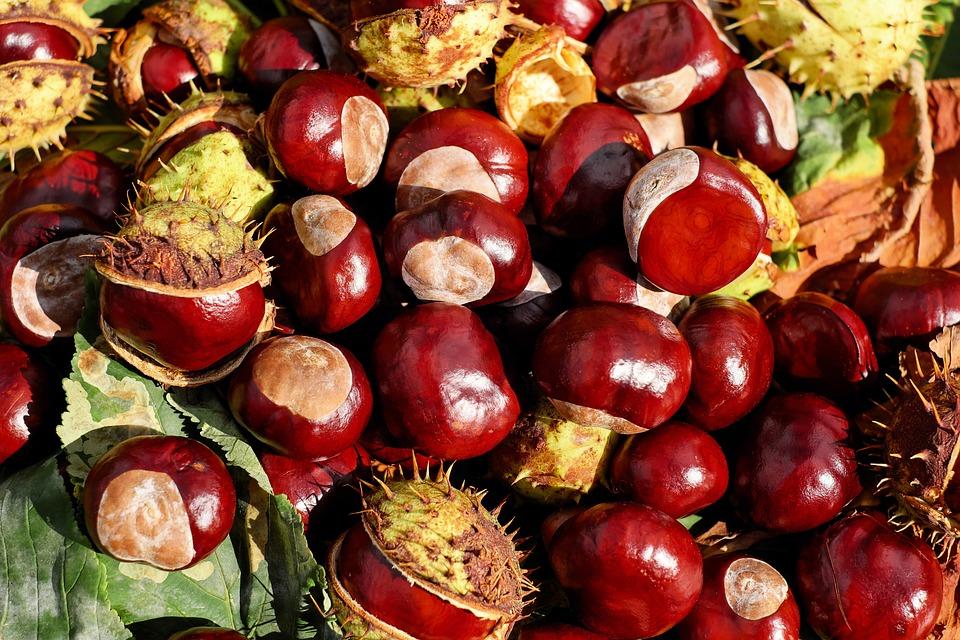 Chestnut, Buckeye, Fruits, Red, Shiny, Sting