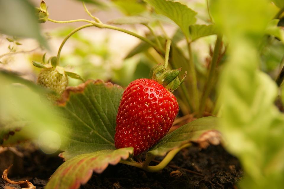 Strawberries, Fruit, Sweet, Food, Fruits, Mood