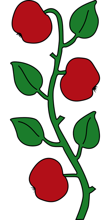 Plant, Red, Fruits, Green, Stem, Leaves, Leafy, Apples