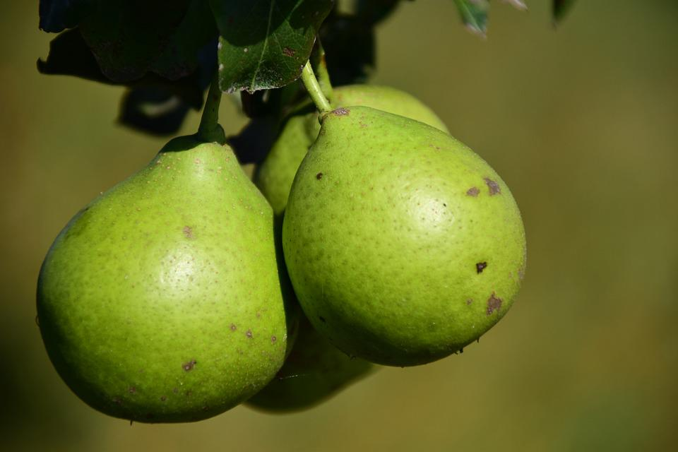 Pear, Fruit, Fruits, Summer, Healthy, Green, Vitamins