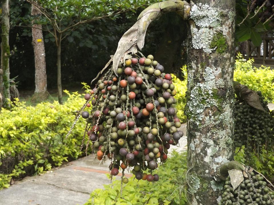Fruit, Flowers, Tree, Flower, Nature, Fruits