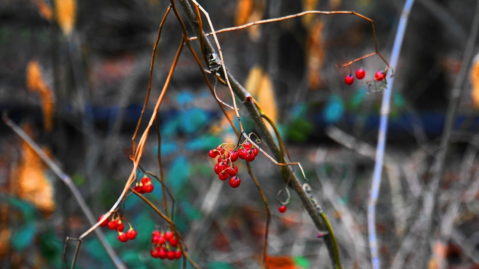 Fruits Of The Forest, Winter, Forest, Macro, Nature