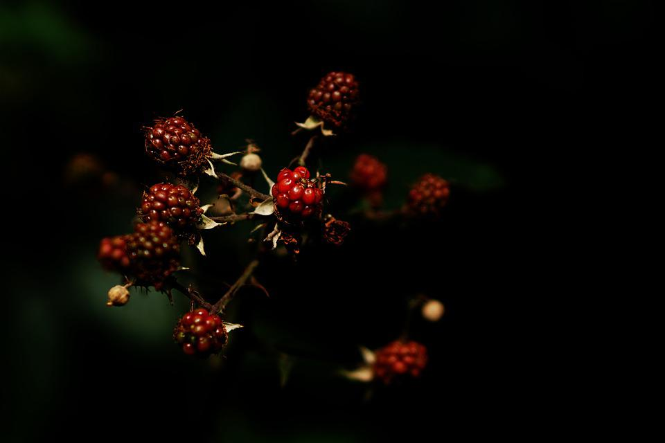 Fruits Of The Forest, Red, Purple, Fruits, Frisch