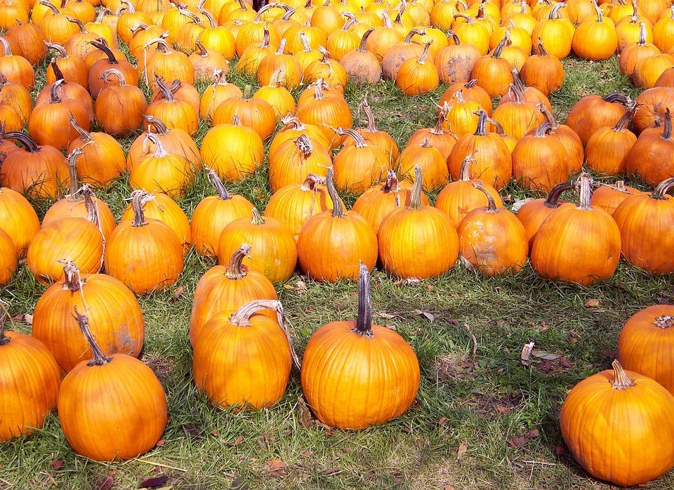 Pumpkins, Autumn, Fall, Orange, Yellow, Fruits