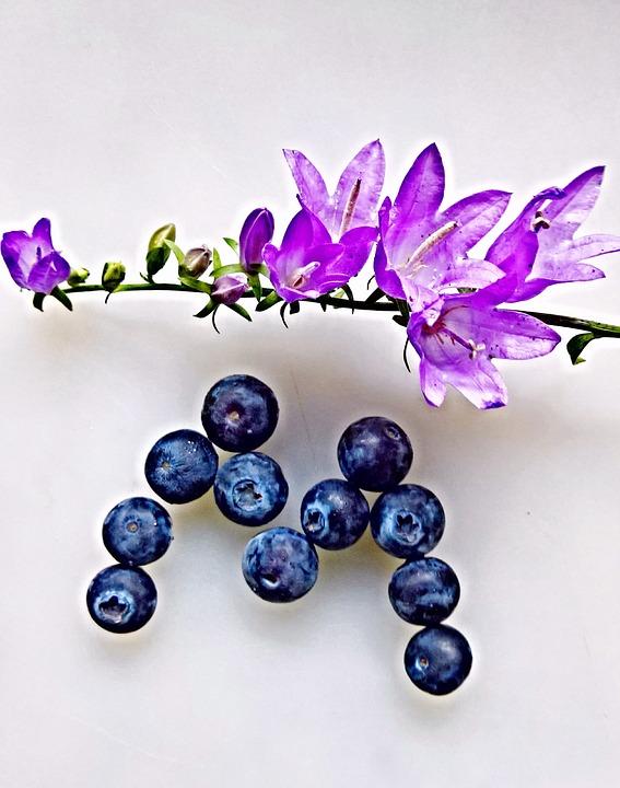 Bluebells, Violet, Blueberries, Fruits
