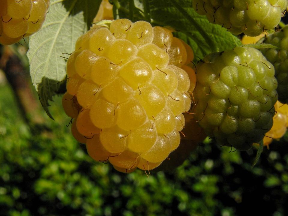 Raspberry, Yellow, Sweet, Vitamins, Fruits, Fruity