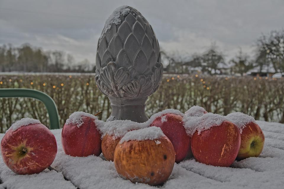 Apples, Winter, Still Life, Snow, Fruits, Outdoors
