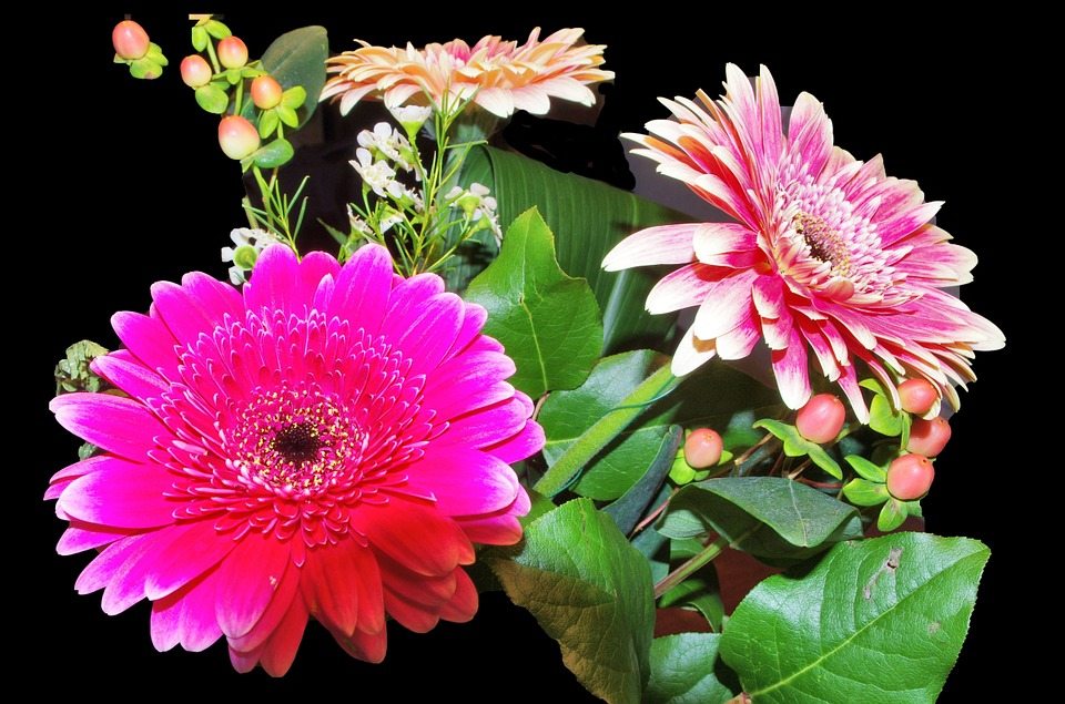 Gerbera, Flowers, Fucsia, Pink, Leaves, Berries