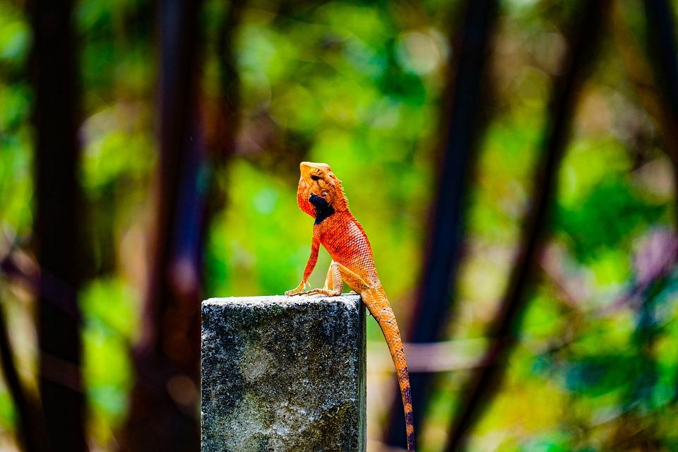 Gecko, Animals, Fujil Photo
