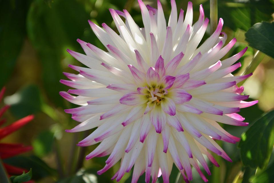 Flower, Plant Petals, Fulfillment, Nature, Spring